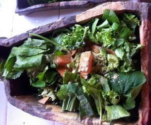 Iguana salad mix