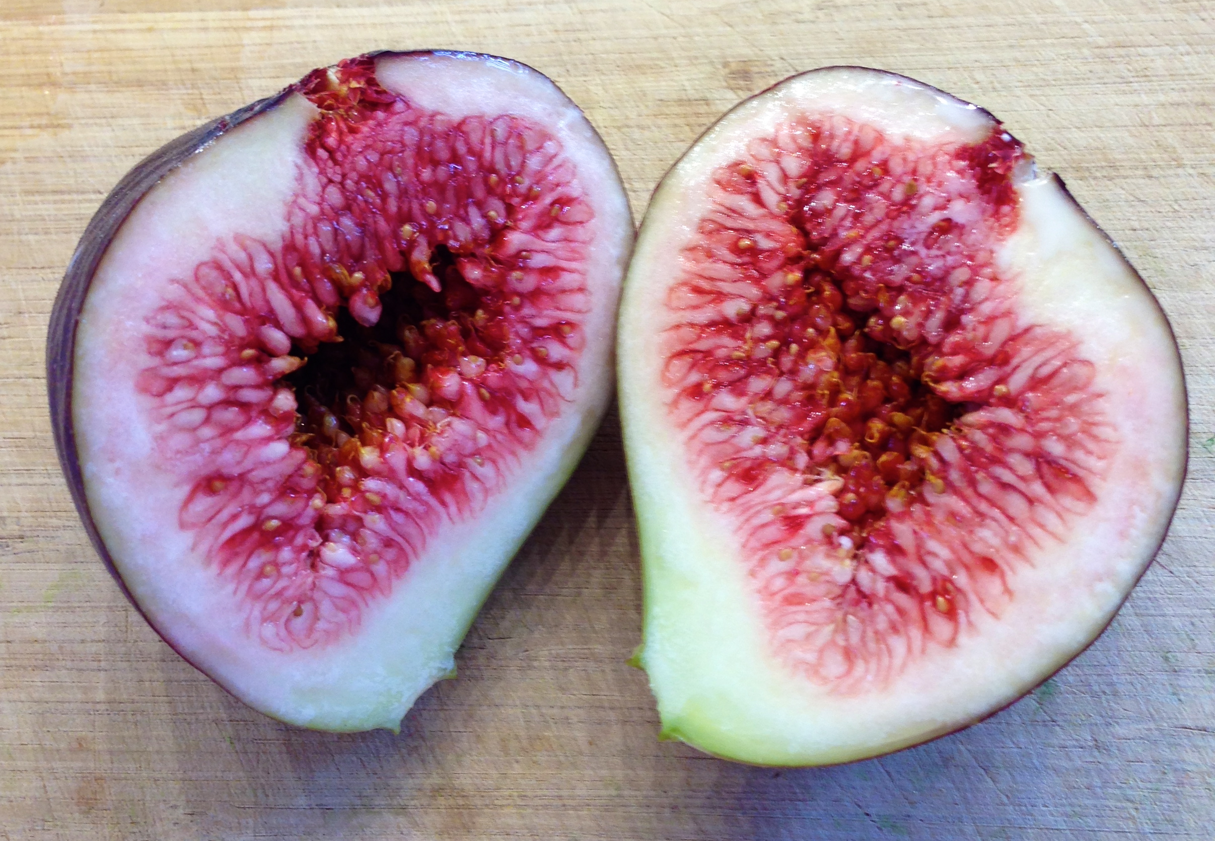 Figs Are Healthy Fruit For Your Cyclura Reptile Function