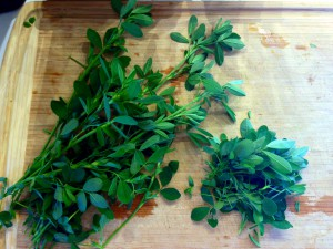 Fresh alfalfa leaves