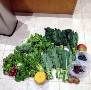 Sample of variety of vegetables and greens delivered to us from the local organic farm